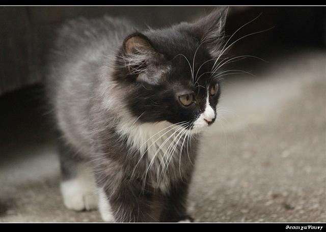 一群优雅的流浪小猫